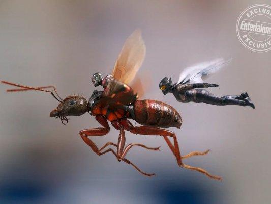 poltrona-homem-formiga-vespa-19abr18